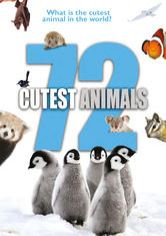 72 Cutest Animals